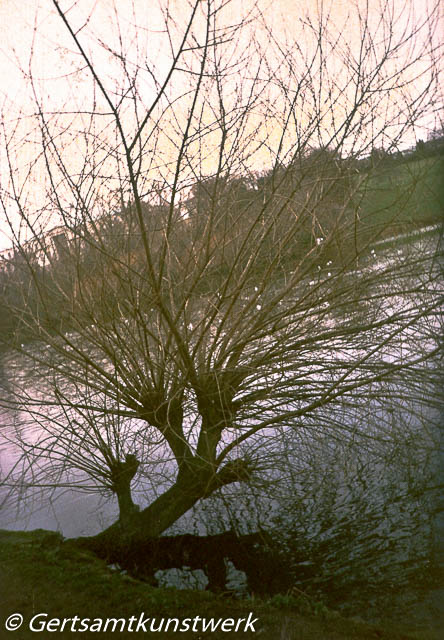 Tree at the lake