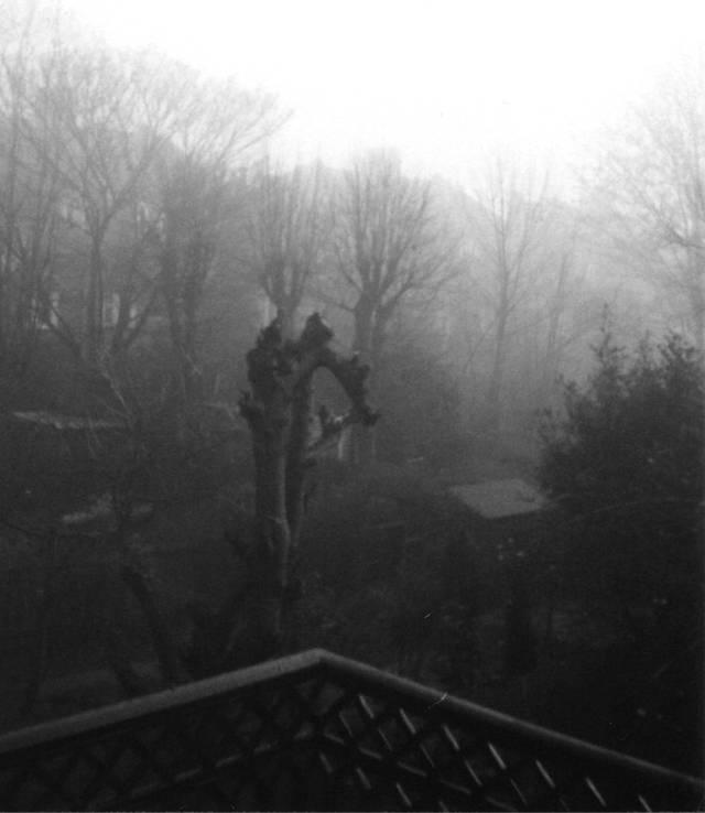 A foggy day in Streatham