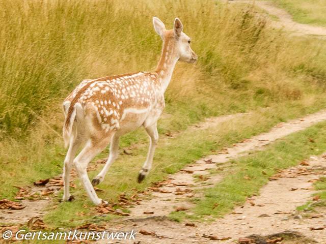 Babycham deer