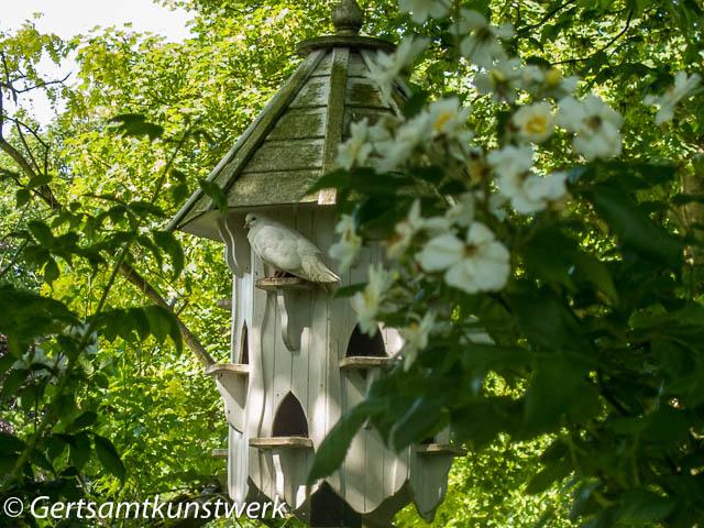 Dove and cote