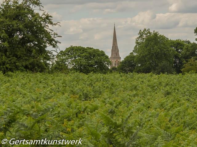 Ferns and spire