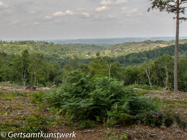 Punchbowl view