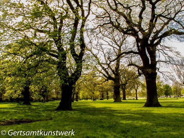 Contrast trees