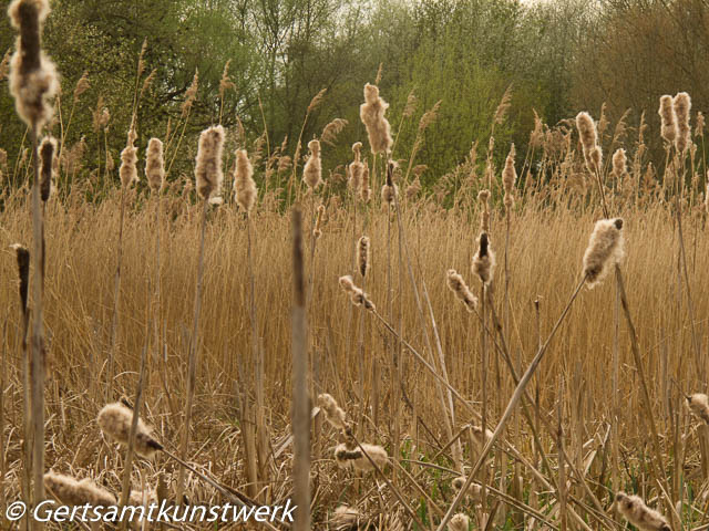 Seeded grass